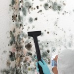 Black-Mold-Remediation-Kent