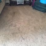 Kent-Dirty-Carpet