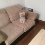 Kent-Sofa-Pet-Stain-Cleaning