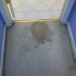 Kent-Vomit-1-before-carpet