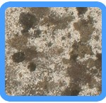 Water-Mold-Removal-Kent